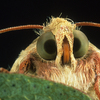 A Pesky Rumble: Pink Bollworms Vs. Cotton Farmers