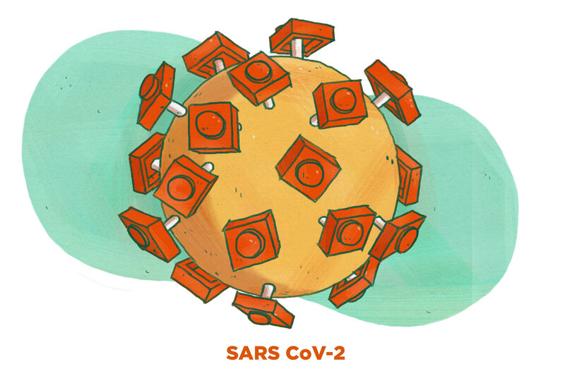 The SARS CoV-2 virus is covered in spikes.
