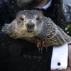 At the virtual Groundhog Day party, Punxsutawney Phil expects to expect 6 more weeks of winter