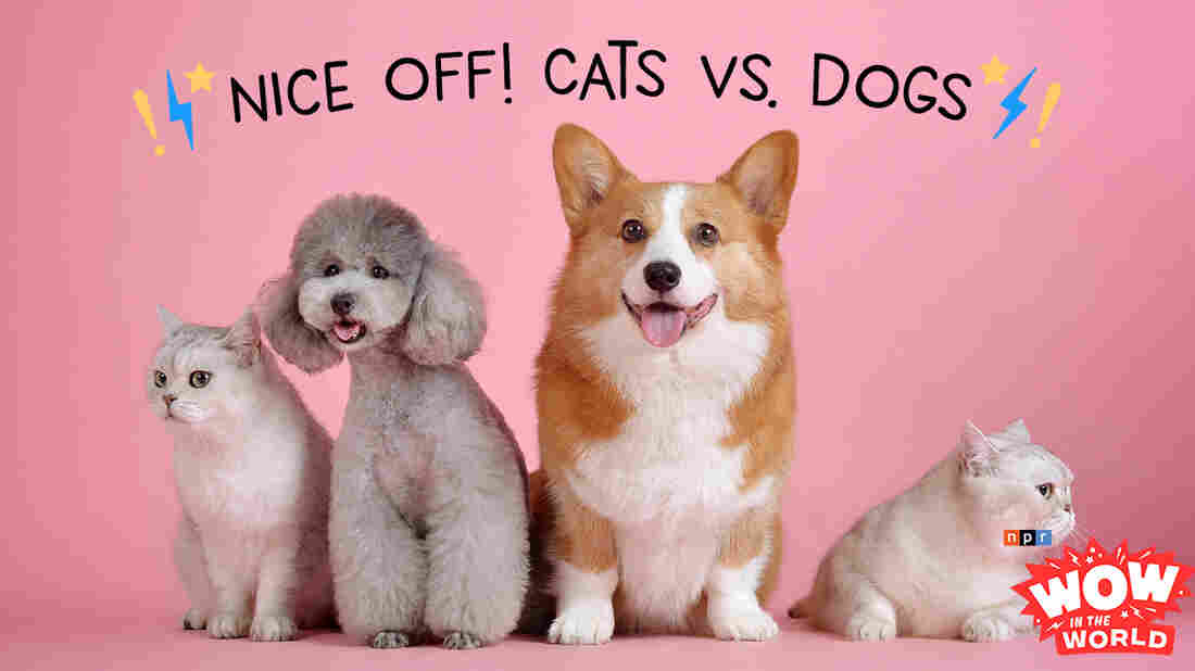 """It's a rivalry that goes back as far as time itself; Cats vs Dogs! For the past 10,000 years dogs have held the title of 'Man's Best Friend', but scientifically speaking, are dogs any more friendlier than your average feline? Well, luckily that's the topic of this years' """"Nice-Off!""""! Listen as Guy and Mindy give play by play coverage!"""