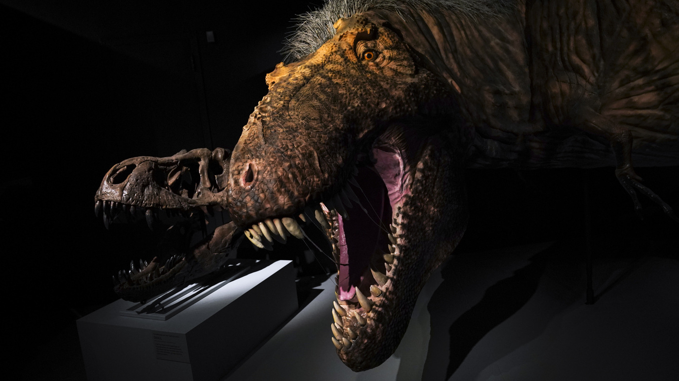 8-Year-Old Calls Out NPR For Lack Of Dinosaur Stories