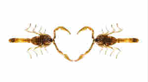 Birds! Chocolate! Scorpions! Happy Valentine's Day!