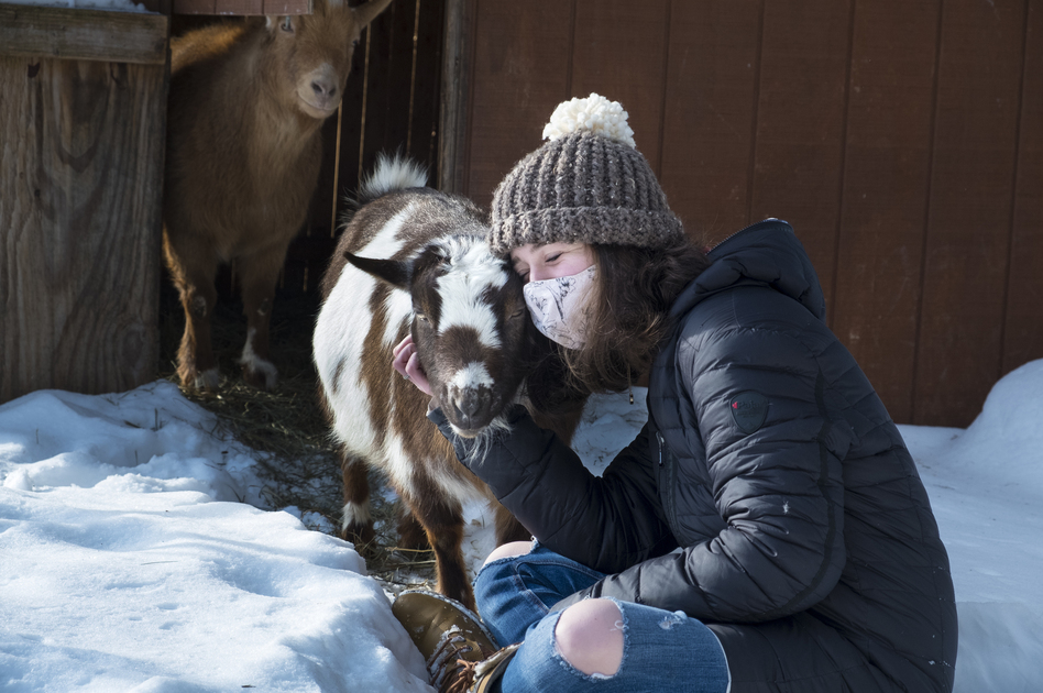 A reader asks: I want to have a private cuddle session with some goats but am concerned that the goats may have cuddled with other people. What's the COVID-19 risk? Note: The goat and human in the photo above are part of the same pandemic pod.