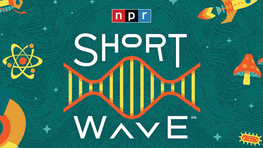 Short Wave, the daily science podcast from NPR