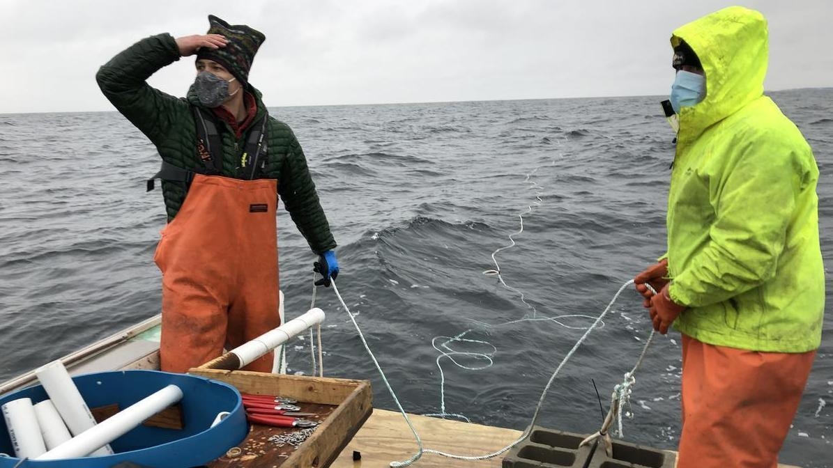 'Run The Oil Industry In Reverse': Fighting Climate Change By Farming Kelp