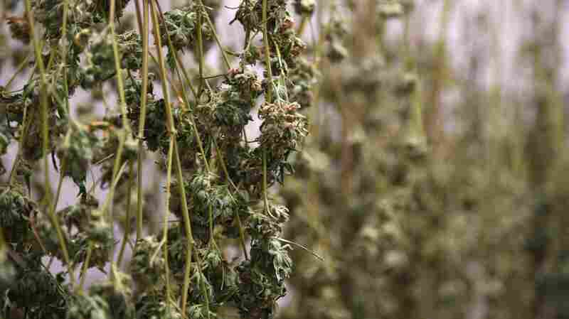 America's Next Generation Of Legal Marijuana: New State Laws Focus On Racial Equity