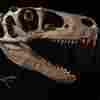 Utah Considers State Park Named For Utahraptor Dinosaur