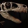 Utah es un parque estatal que lleva el nombre del dinosaurio Utahrapator