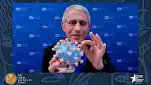 Fauci Donates Personal Coronavirus Model To Smithsonian