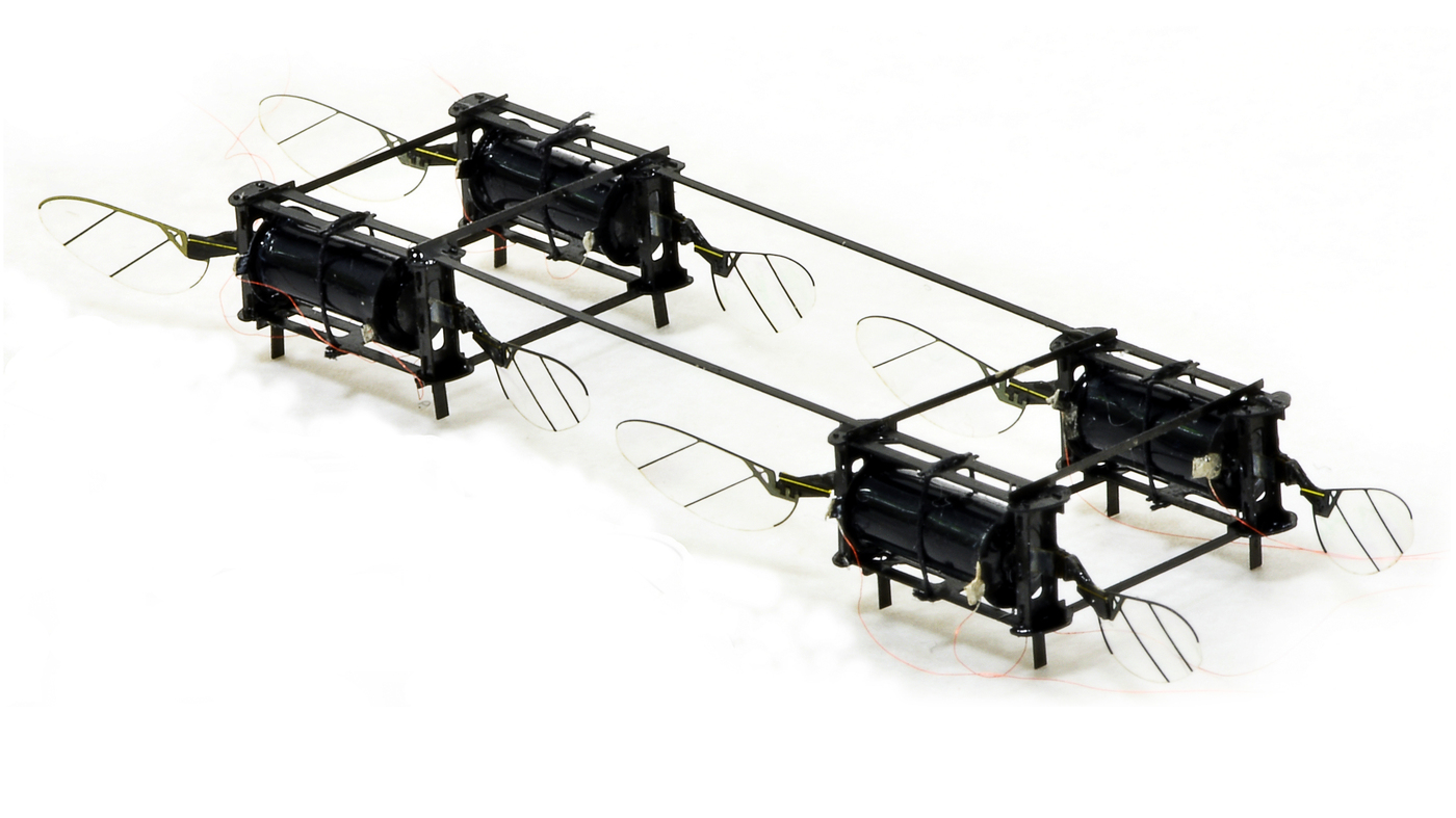 Insect-Size Flying Robots Could Help On Rescue Missions, MIT Scientist Says - NPR