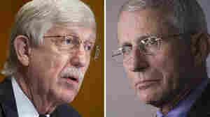 The Day Everything Changed: Fauci, Collins Reflect On 1 Year Of The Pandemic