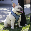 The Most Popular Dog Breeds Of 2020: Labs And French Bulldogs