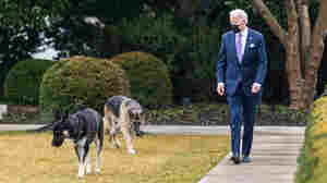 Biden Defends Major As 'A Sweet Dog' Just In Need Of Some Training