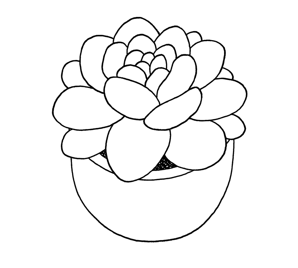 A soothing succulent