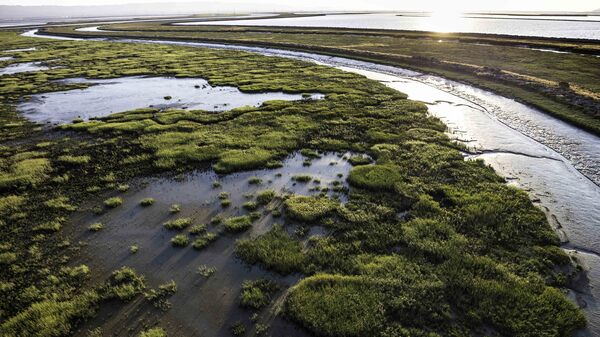 Coastal communities are racing to restore marshes, like these in San Francisco Bay, to provide a barrier against storm surges and rising seas.
