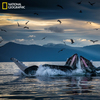 Photos: The Culture Of Whales