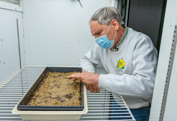 Frank Telewski spreads seeds from the Beal bottle in a tray in the growth lab in the Plant Biology Building.