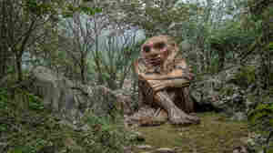 Far From The Internet, These Big, Benevolent Trolls Lure Humans To Nature