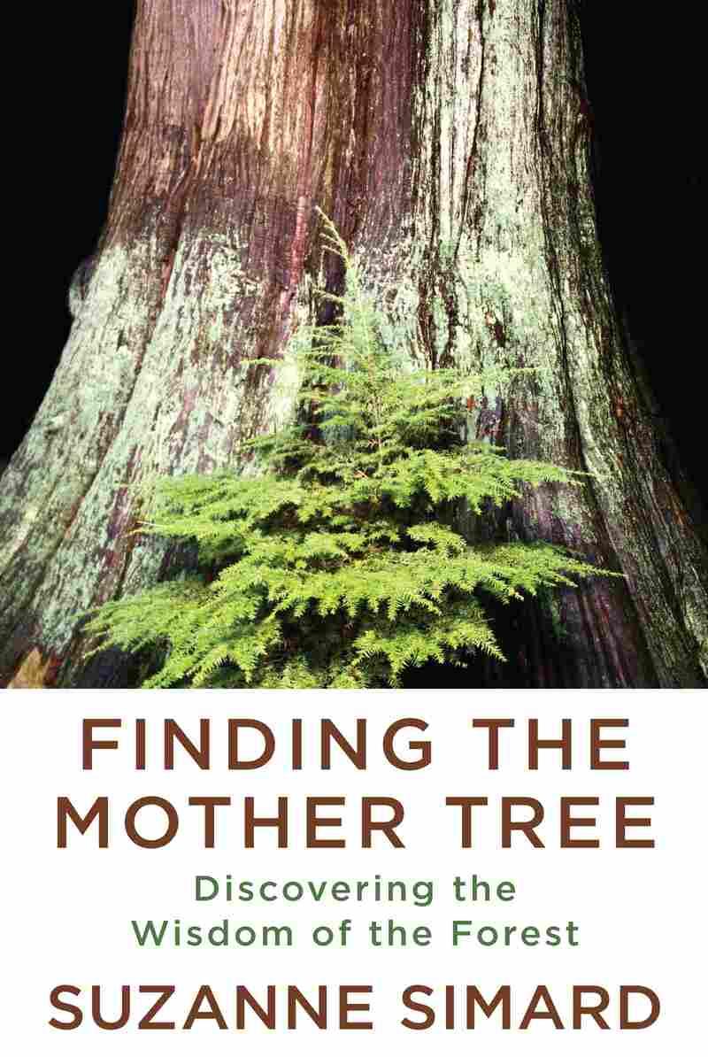 Mother Tree Ecologist Suzanne Simard Shares Secrets Of Tree Communication : Shots - Health News - NPR
