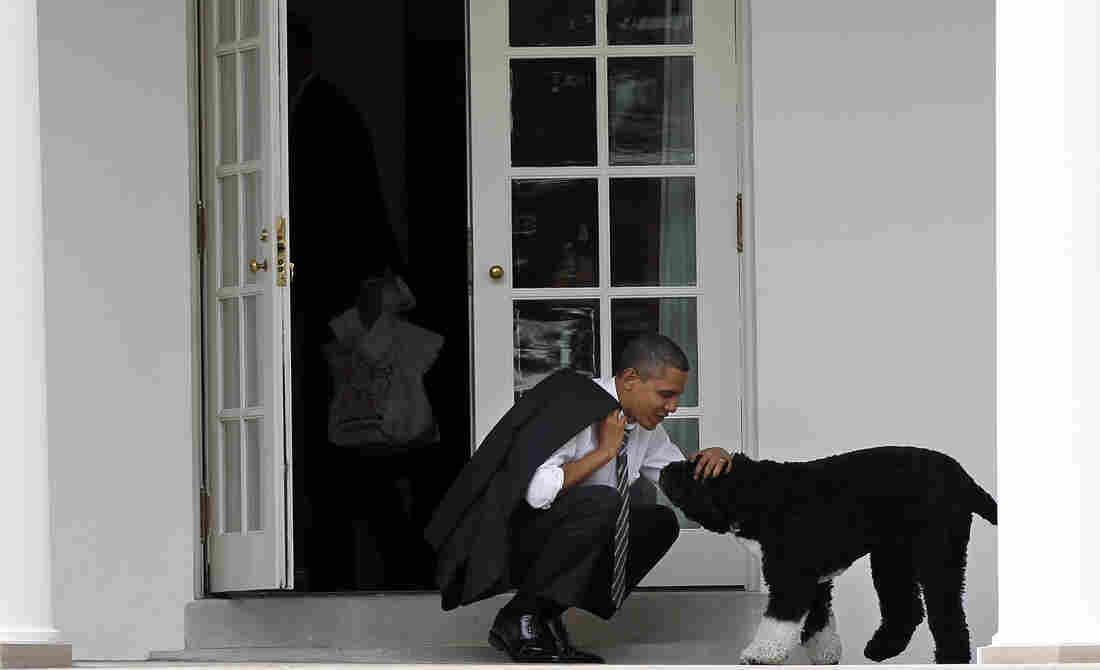 The Obama family's dog Bo died, and the internet is really bummed