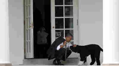 Obamas Mourn Death Of 'True Friend,' Beloved 'First Dog' Bo