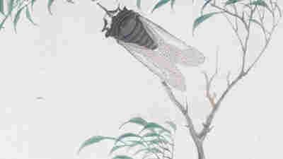 Brood X Is Back — But Cicadas Have Been In Chinese Art For Millennia