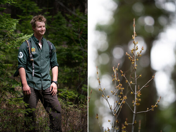 Ohioan Joe Spofforth (left) and others were motivated to join the Montana Conservation Corps, in part, by the COVID-19 pandemic. A budding tree (right) appears near a trail to Tally Lake.