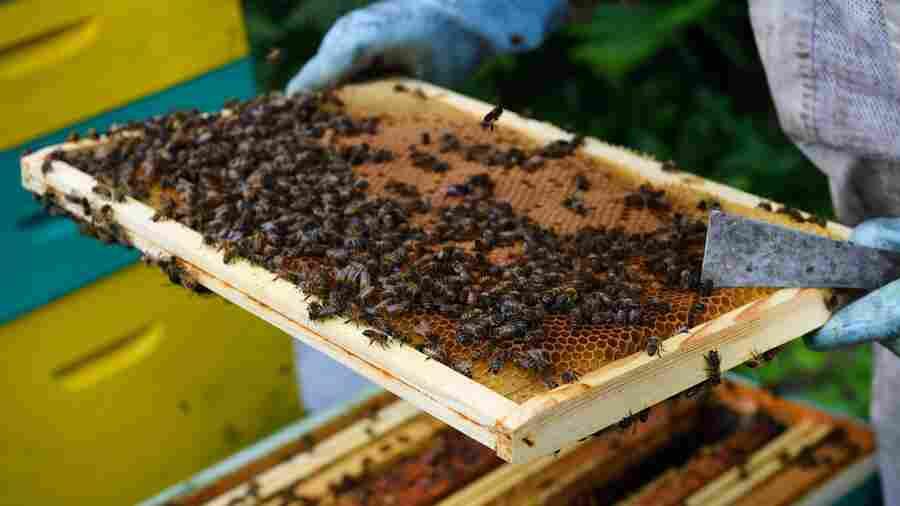 Stolen Beehives Devastate French Beekeepers