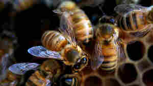 Why You Should Celebrate World Bee Day Today