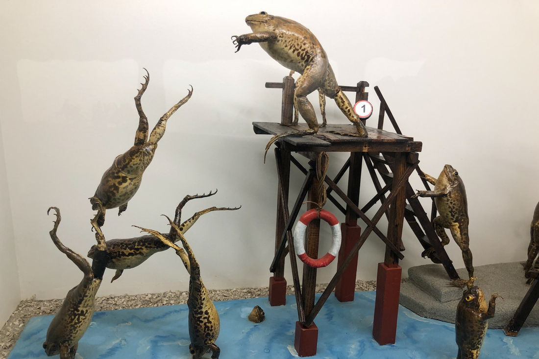Welcome to Froggyland, the Croatian Museum of Taxidermy that may soon arrive in the United States: NPR