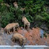 Elephants Wandered Hundreds Of Miles Into A Chinese City. Nobody Knows Why