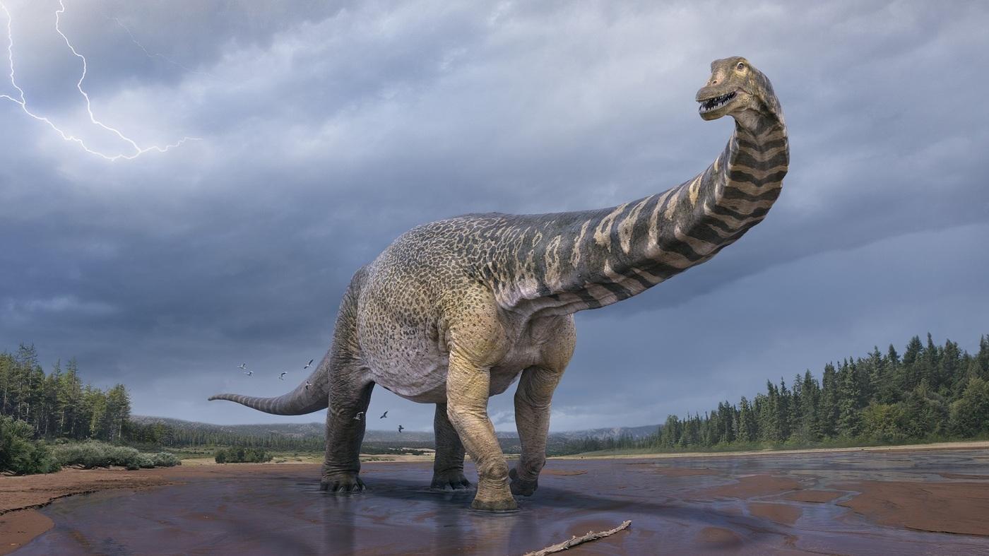 As Long As A Basketball Court: Australia's Largest Dinosaur Confirmed – NPR