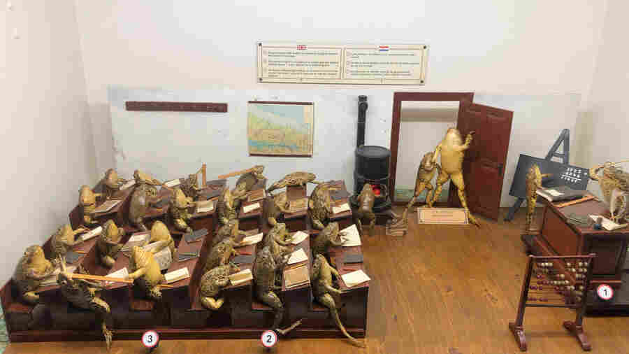 Welcome To Froggyland, The Croatian Taxidermy Museum That May Soon Come To The U.S.