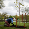 Bringing Back Trees To 'Forest City's' Redlined Areas Helps Residents And The Climate