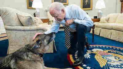 President Biden's Dog Champ Dies