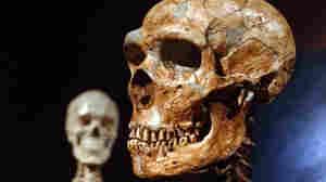 Colder Climates Meant Bigger Bodies For Ancient Humans