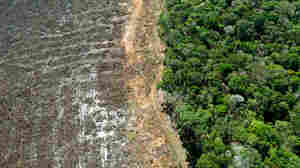 Why Clearing Brazil's Forests For Farming Can Make It Harder To Grow Crops