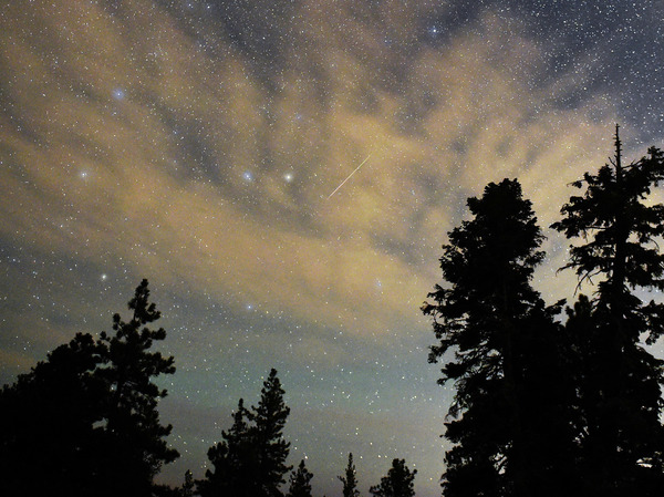 A Perseid meteor streaks across the sky above desert pine trees in the Spring Mountains National Recreation Area, Nevada. The annual display, known as the Perseid shower because the meteors appear to radiate from the constellation Perseus in the northeastern sky, is a result of Earth's orbit passing through debris from the comet Swift-Tuttle.