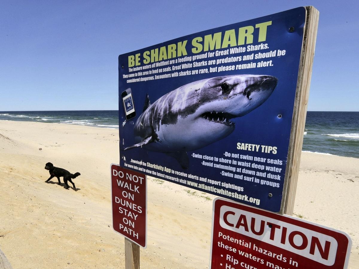 "No more shark attacks.  Call them ""Bites"", say the Australian states: NPR"