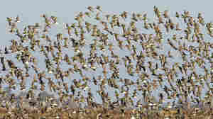 Saving Birds With Economics