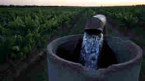 Without Enough Water To Go Around, Farmers In California Are Exhausting Aquifers