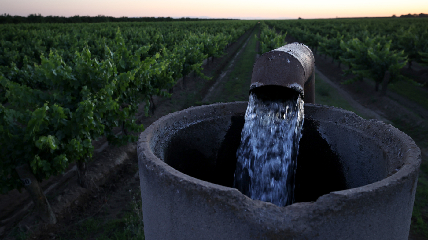 Well water is pumped into an irrigation system at a vineyard in Madera, California. California is suffering from drought, and farmers
