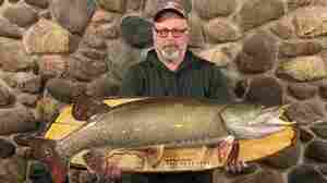 How To Catch The Elusive Musky Fish, Release It And Still Have It As A Trophy
