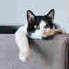 Does Your Cat Like You — Or Just Tolerate You?