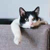 猫はあなたを好きですか? それとも、あなたを容認しますか?