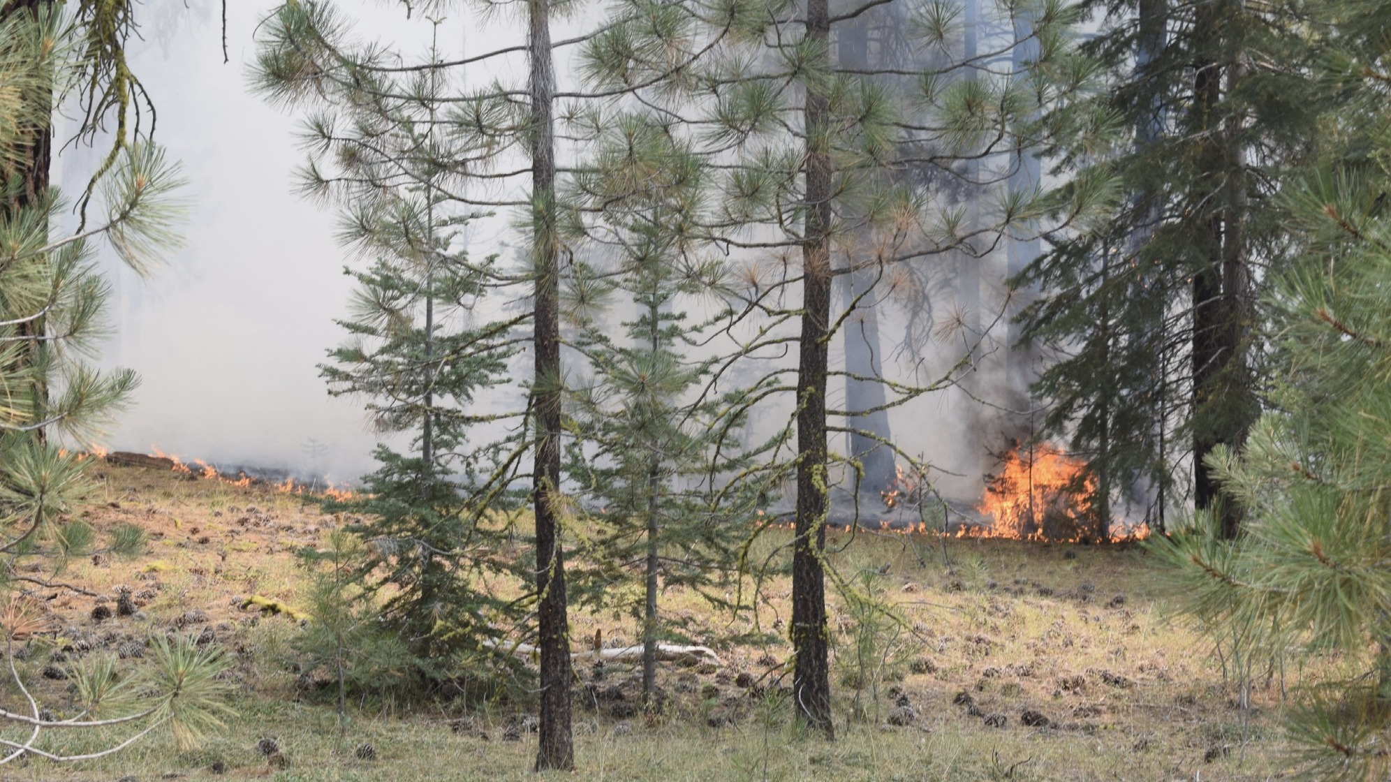 Investigators say they've linked the Ranch Fire, pictured here shortly after its discovery, and other blazes to Gary Maynard, a former college professor. He is charged with starting only the Ranch Fire.