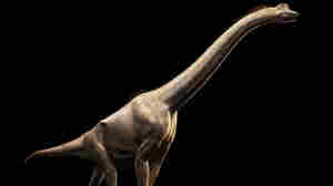 Scientists Discover Not 1, But 2 New Dinosaur Species In China