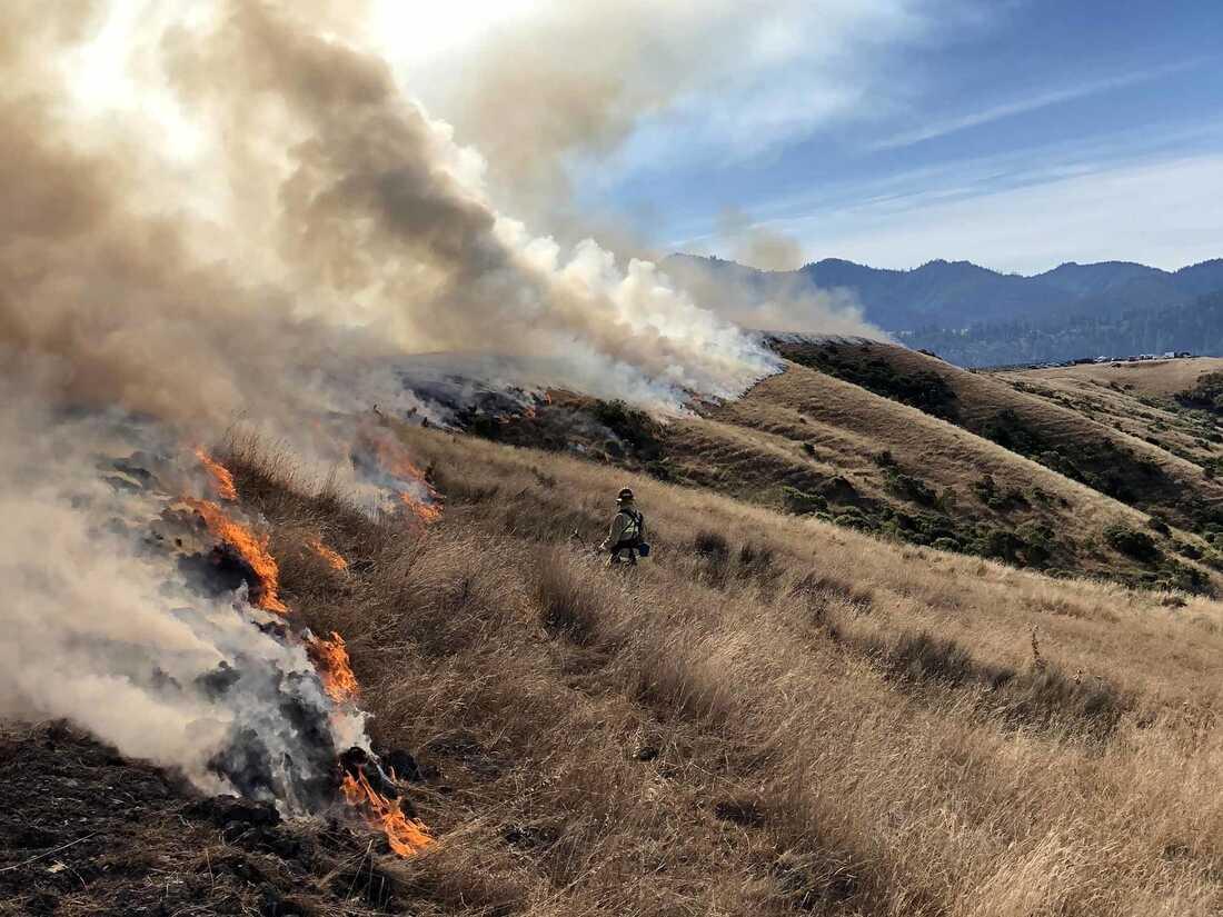 California copies Florida to stop huge wildfires: NPR
