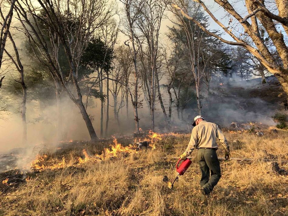 Prescribed burns, like this one in Humboldt County, Calif., reduce the underbrush without destroying trees. (Lenya Quinn-Davidson)