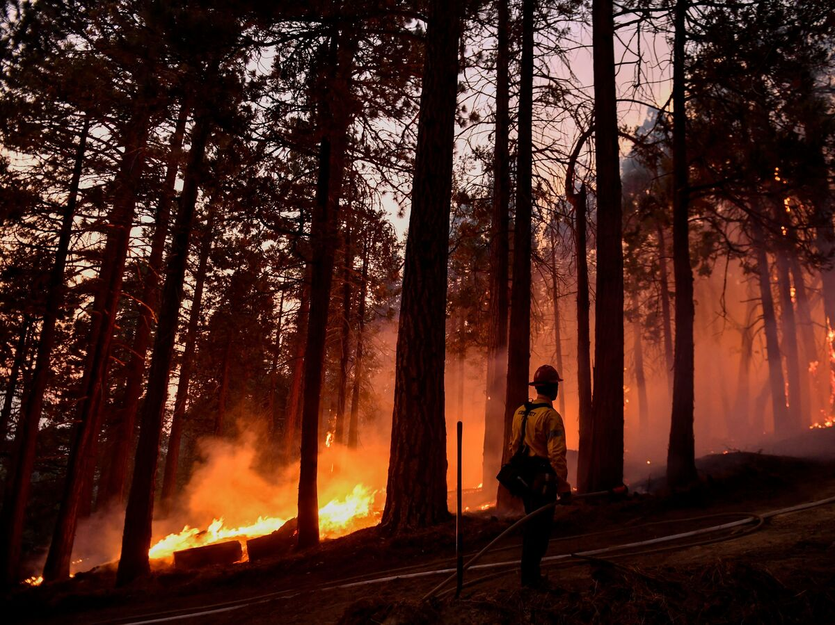 Every California National Forest Closes Due to Wildfire Risk: NPR